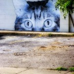 Cat_Graffitti_MG_5027