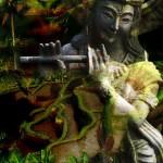 KrishnaField