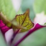 Leaves_MG_0276