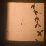 Vine_Window_MG_1126