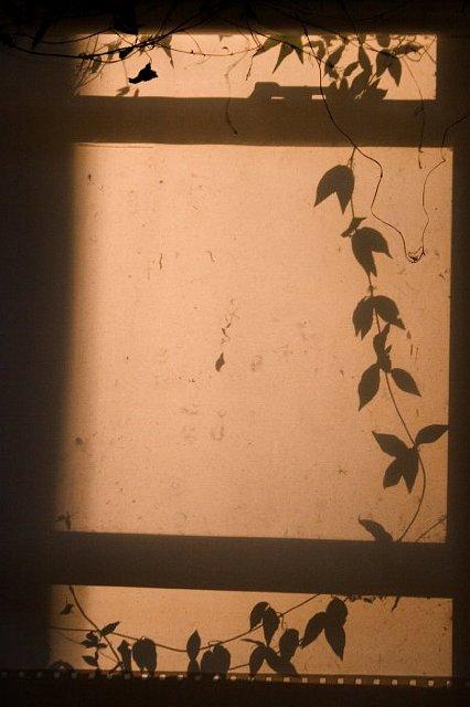 Vine Morning